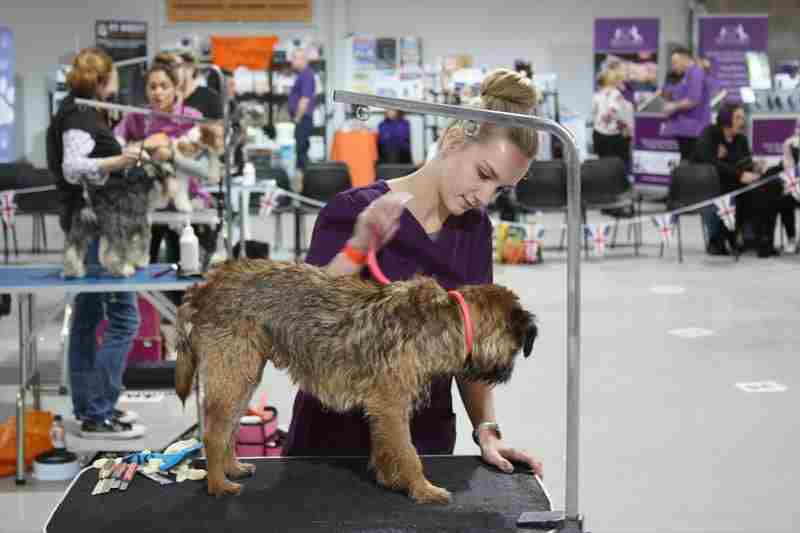 British Dog Grooming Championships in Warwick on 28 October 2018