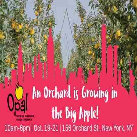 Opal Orchard New York City in New York on 19 Oct