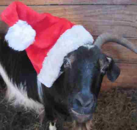 Annual Country Christmas Fair at Dalby Farm in Scituate on 1 Dec