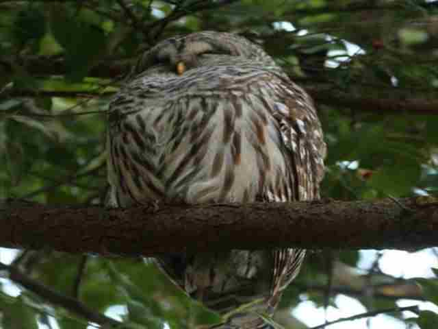 Be Owl Wise in North Vancouver on 20 Aug