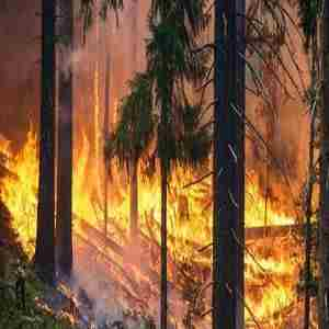 Hot Topics: Living with Wildfires - FREE Panel Discussion in North Vancouver on 28 Sep