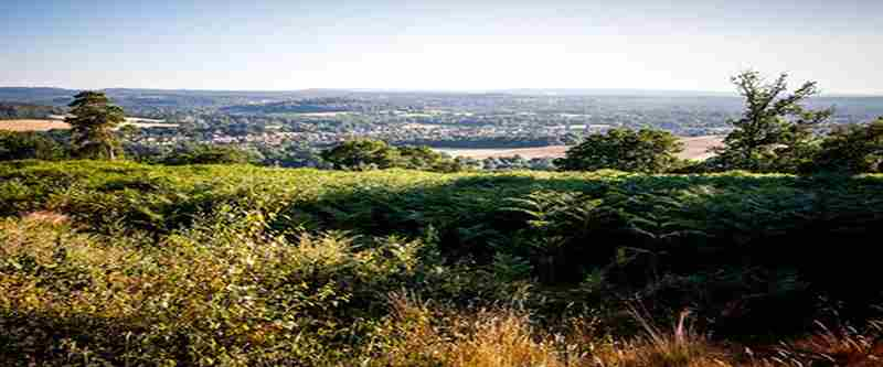 Hard As Snails, Surrey Hills trail race in Guildford on 1 Jul