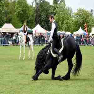 The Nonsuch Town and Country Show and Surrey Festivals of Dogs in Sutton Epsom on 24 May