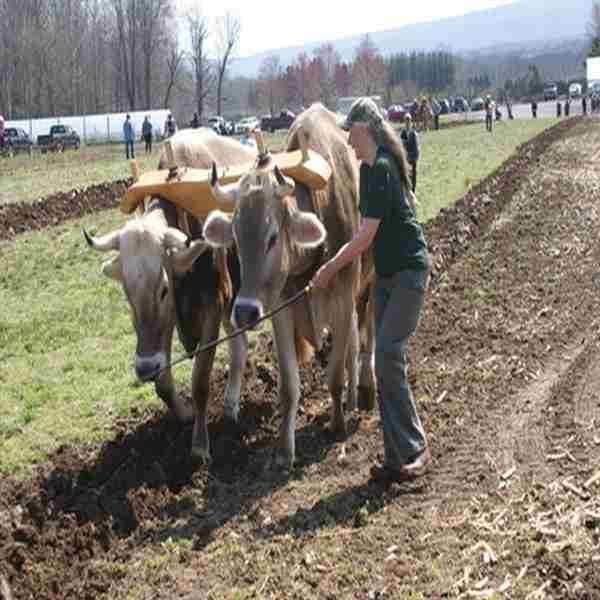 Hudson Valley Draft Horse Association Spring Plow in Accord on 25 Apr