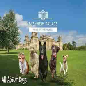 All About Dogs Show - Paws at the Palace 2020 in Oxfordshire on 4 Jul