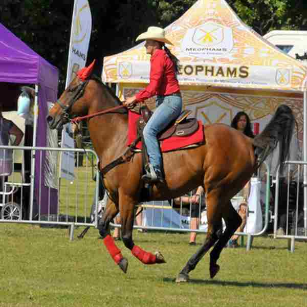 The Nonsuch Town and Country Show and Surrey Festivals of Dogs in Epsom on 12 Sep