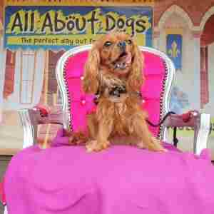 All About Dogs Show Newark 2021 in Newark on 4 Sep