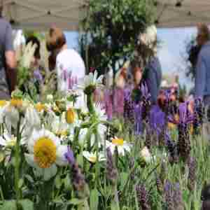 The Newark Garden Show 2021 in Newark on 3 Sep