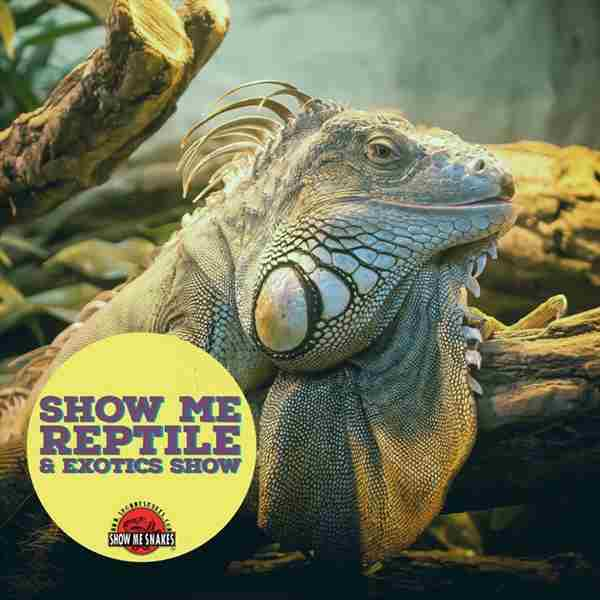 Show Me Reptile and Exotics Show in Davenport on Sunday, September 27, 2020