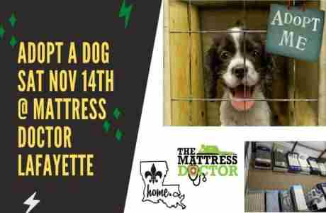 Saturday 11/14 - Rescue Dog Adoption Day Fundraiser at Mattress Doctor in Youngsville in Youngsville on 14 Nov