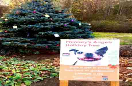 Walk the Historic Pierce House Estate Grounds to See Phinney's Angel Tree in Lincoln on 11 Nov
