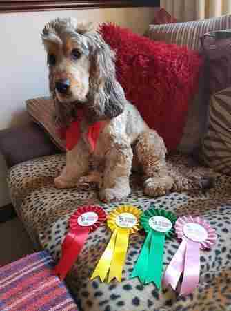 The Easter East Anglian Festivals of Dogs in Thetford on 4 Apr