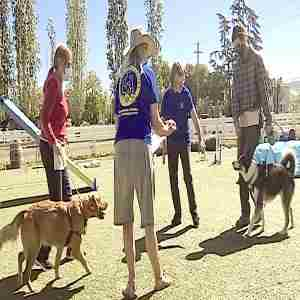 Canine Good Citizen Training/Testing - Napa in Napa on 7 May