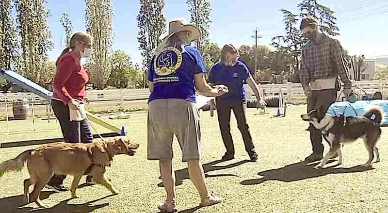 Canine Good Citizen Training/Testing - Napa in Napa on 12 May