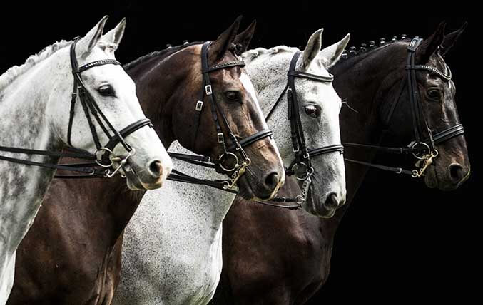 Horse Shows - Racing Events